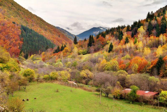 ヨーロッパの秋の風景 ブルガリア リラ国立公園
