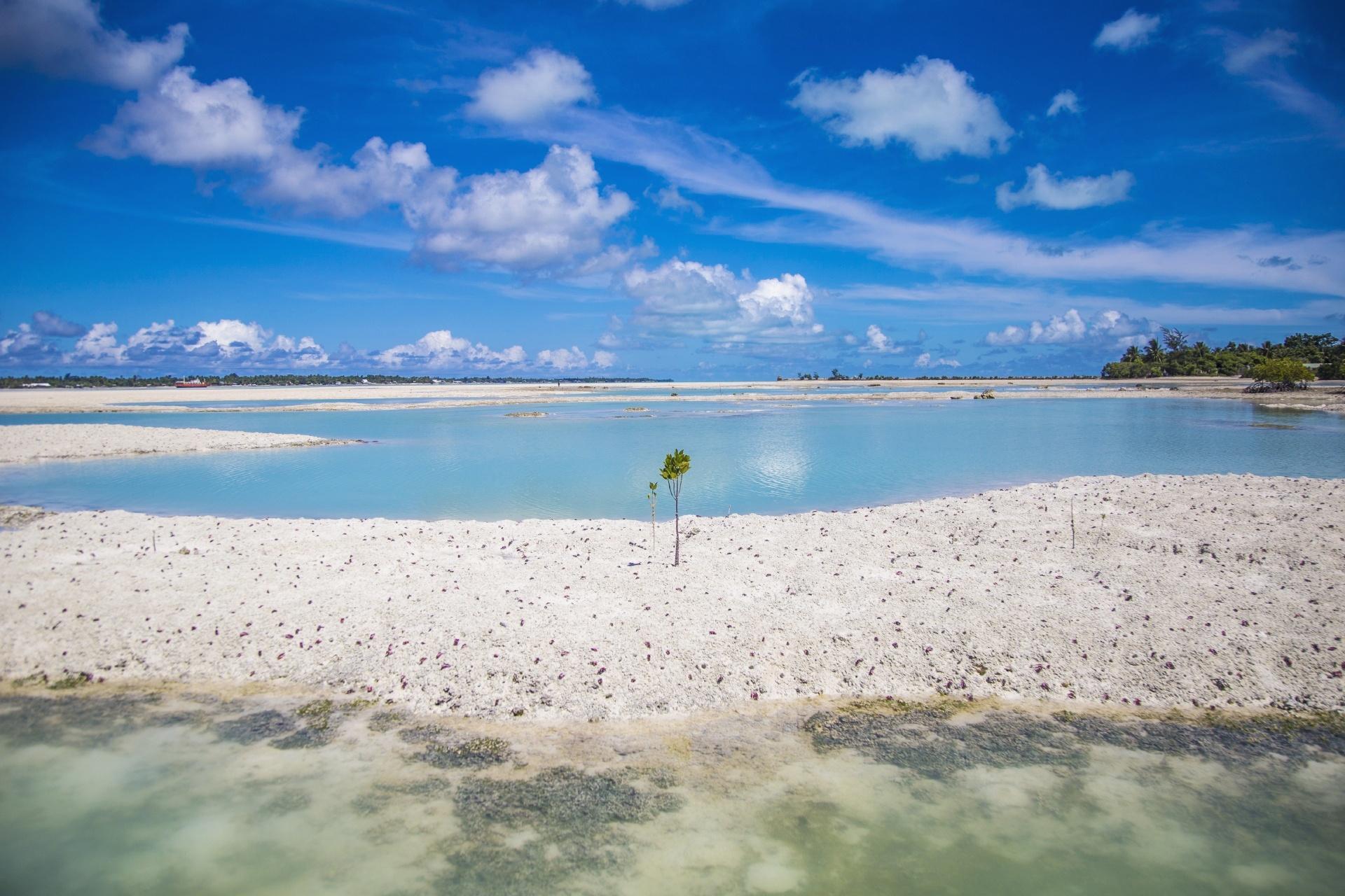 マングローブとラグーン キリバスの海