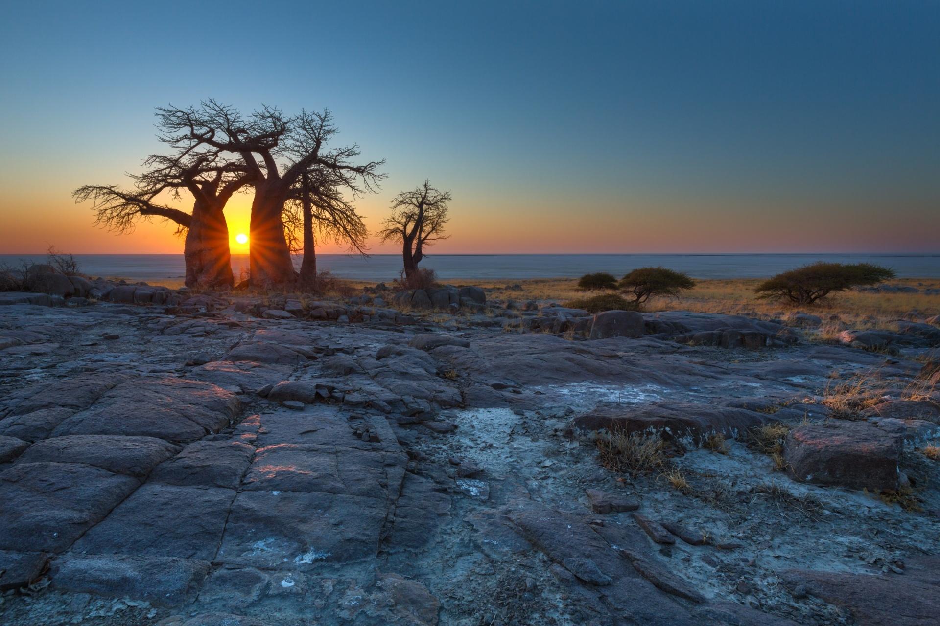 バオバブの木と朝日 マカディカディ ボツワナの風景