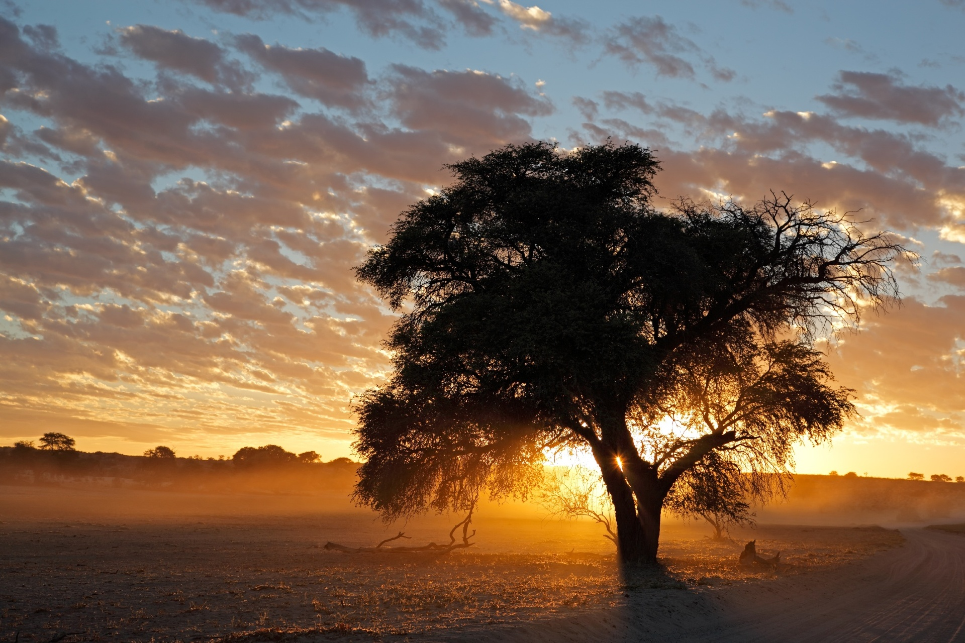 カラハリ砂漠の夕日 南アフリカの風景