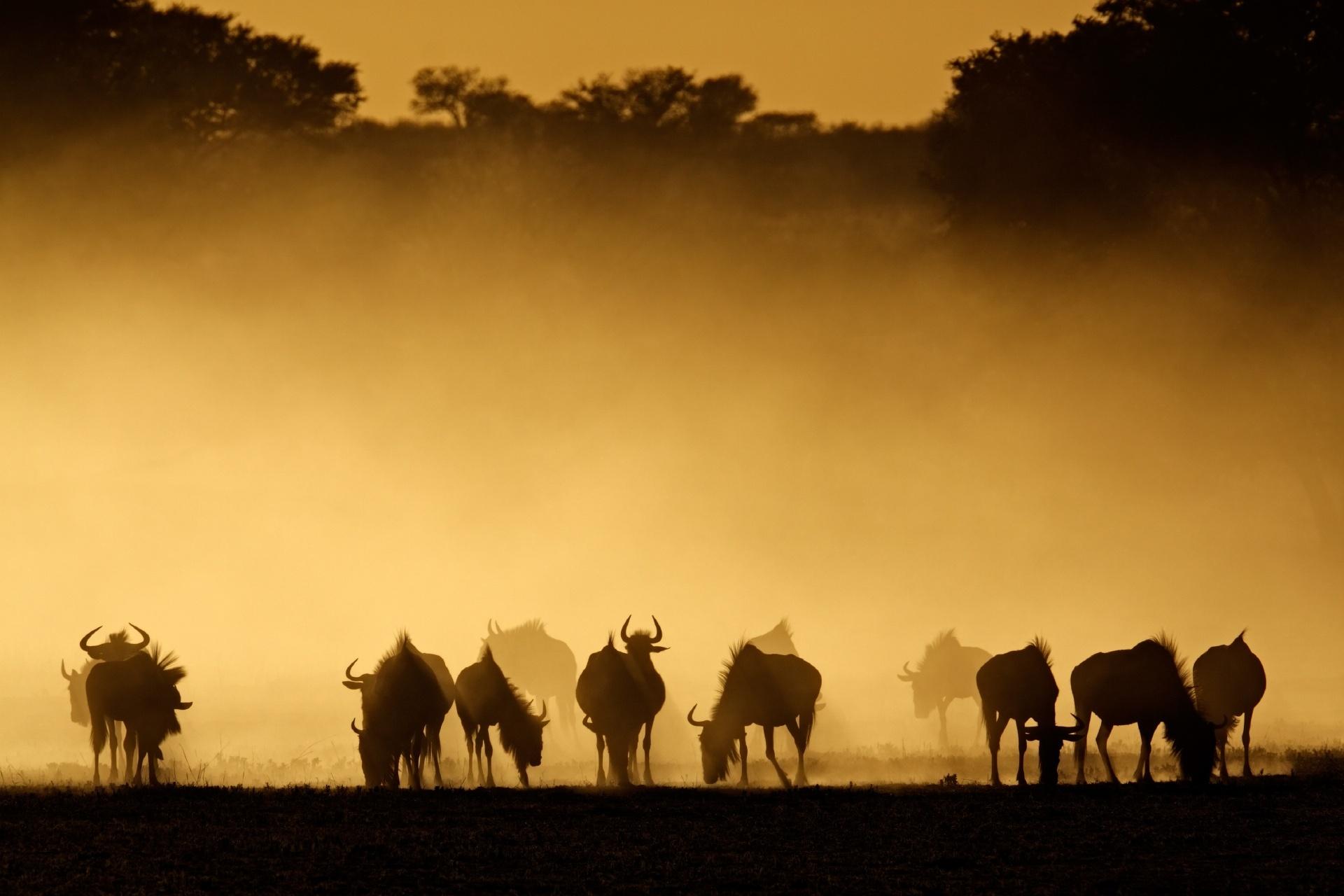朝のカラハリ砂漠の風景 南アフリカ