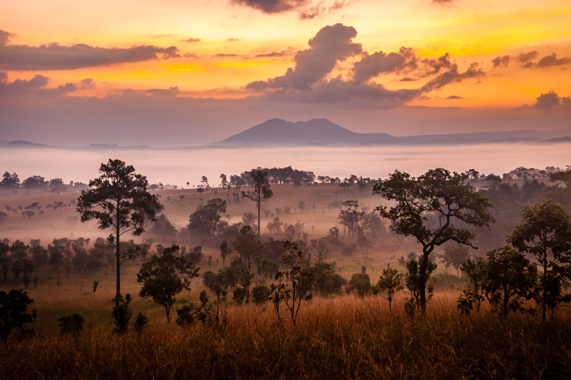 サバナの朝 ケニアの風景